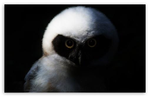Download Baby Owl, Night HD Wallpaper