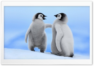 Baby Penguins HD Wide Wallpaper for Widescreen