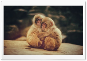 Baby Snow Monkeys HD Wide Wallpaper for Widescreen