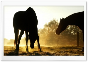 Backlit Horses Duesseldorf Germany HD Wide Wallpaper for 4K UHD Widescreen desktop & smartphone