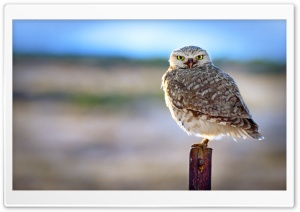 Backlit Owl HD Wide Wallpaper for Widescreen