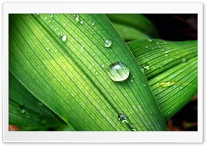 Backyard Raindrops HD Wide Wallpaper for Widescreen