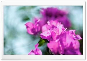 Bagan Bilash Ultra HD Wallpaper for 4K UHD Widescreen desktop, tablet & smartphone