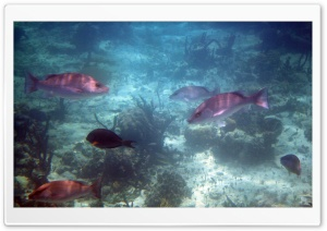 Bahamas Fish HD Wide Wallpaper for Widescreen