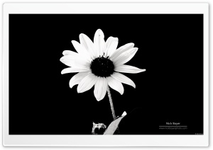 Balck and White HD Wide Wallpaper for Widescreen
