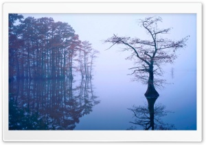 Bald Cypress in Fog, Reelfoot Lake, Tennessee HD Wide Wallpaper for Widescreen