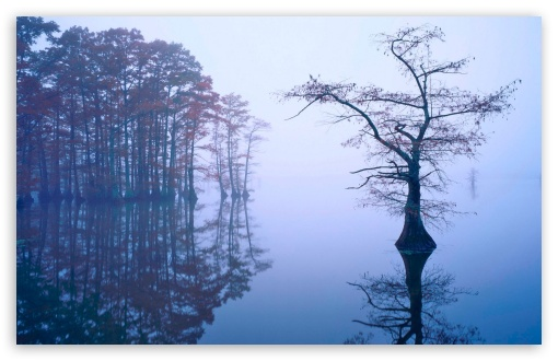 Bald Cypress in Fog, Reelfoot Lake, Tennessee HD wallpaper for Wide 16:10 5:3 Widescreen WHXGA WQXGA WUXGA WXGA WGA ; HD 16:9 High Definition WQHD QWXGA 1080p 900p 720p QHD nHD ; Standard 4:3 5:4 3:2 Fullscreen UXGA XGA SVGA QSXGA SXGA DVGA HVGA HQVGA devices ( Apple PowerBook G4 iPhone 4 3G 3GS iPod Touch ) ; Tablet 1:1 ; iPad 1/2/Mini ; Mobile 4:3 5:3 3:2 16:9 5:4 - UXGA XGA SVGA WGA DVGA HVGA HQVGA devices ( Apple PowerBook G4 iPhone 4 3G 3GS iPod Touch ) WQHD QWXGA 1080p 900p 720p QHD nHD QSXGA SXGA ;