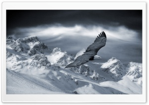 Bald Eagle Flying Over Mountains HD Wide Wallpaper for Widescreen