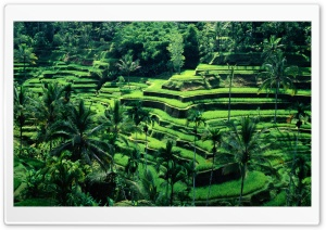 Bali, Indonesia HD Wide Wallpaper for Widescreen