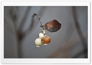 Ball Cluster on Branch Ultra HD Wallpaper for 4K UHD Widescreen desktop, tablet & smartphone
