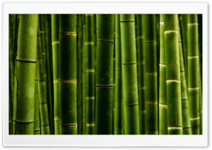Bamboo Ultra HD Wallpaper for 4K UHD Widescreen desktop, tablet & smartphone