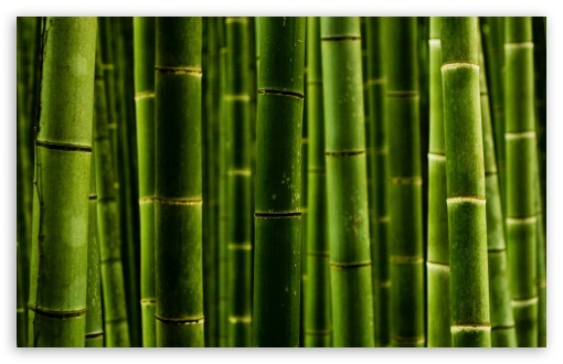 Bamboo HD wallpaper for Wide 16:10 5:3 Widescreen WHXGA WQXGA WUXGA WXGA WGA ; HD 16:9 High Definition WQHD QWXGA 1080p 900p 720p QHD nHD ; Standard 4:3 5:4 3:2 Fullscreen UXGA XGA SVGA QSXGA SXGA DVGA HVGA HQVGA devices ( Apple PowerBook G4 iPhone 4 3G 3GS iPod Touch ) ; Tablet 1:1 ; iPad 1/2/Mini ; Mobile 4:3 5:3 3:2 16:9 5:4 - UXGA XGA SVGA WGA DVGA HVGA HQVGA devices ( Apple PowerBook G4 iPhone 4 3G 3GS iPod Touch ) WQHD QWXGA 1080p 900p 720p QHD nHD QSXGA SXGA ; Dual 16:10 5:3 16:9 4:3 5:4 WHXGA WQXGA WUXGA WXGA WGA WQHD QWXGA 1080p 900p 720p QHD nHD UXGA XGA SVGA QSXGA SXGA ;