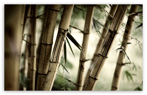 Bamboo HD wallpaper for Wide 16:10 5:3 Widescreen WHXGA WQXGA WUXGA WXGA WGA ; HD 16:9 High Definition WQHD QWXGA 1080p 900p 720p QHD nHD ; Standard 4:3 5:4 3:2 Fullscreen UXGA XGA SVGA QSXGA SXGA DVGA HVGA HQVGA devices ( Apple PowerBook G4 iPhone 4 3G 3GS iPod Touch ) ; Tablet 1:1 ; iPad 1/2/Mini ; Mobile 4:3 5:3 3:2 16:9 5:4 - UXGA XGA SVGA WGA DVGA HVGA HQVGA devices ( Apple PowerBook G4 iPhone 4 3G 3GS iPod Touch ) WQHD QWXGA 1080p 900p 720p QHD nHD QSXGA SXGA ; Dual 5:4 QSXGA SXGA ;