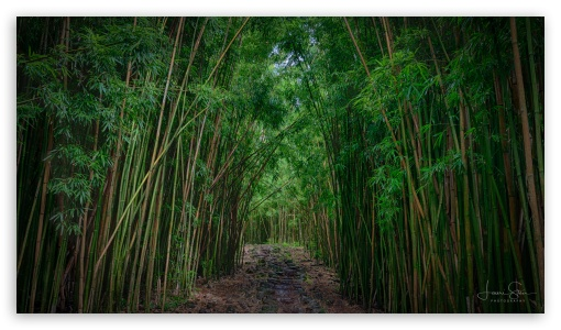 Bamboo UltraHD Wallpaper for UltraWide 21:9 24:10 ; 8K UHD TV 16:9 Ultra High Definition 2160p 1440p 1080p 900p 720p ; UHD 16:9 2160p 1440p 1080p 900p 720p ; Mobile 16:9 - 2160p 1440p 1080p 900p 720p ;