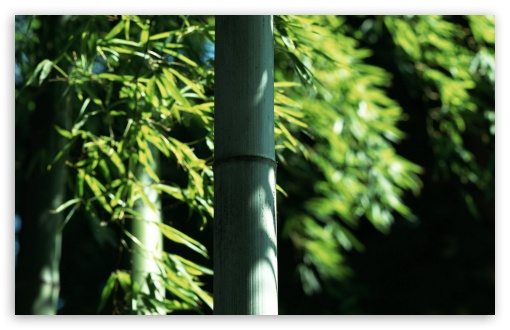 BAMBOO HD wallpaper for Wide 16:10 5:3 Widescreen WHXGA WQXGA WUXGA WXGA WGA ; HD 16:9 High Definition WQHD QWXGA 1080p 900p 720p QHD nHD ; Standard 4:3 5:4 3:2 Fullscreen UXGA XGA SVGA QSXGA SXGA DVGA HVGA HQVGA devices ( Apple PowerBook G4 iPhone 4 3G 3GS iPod Touch ) ; Tablet 1:1 ; iPad 1/2/Mini ; Mobile 4:3 5:3 3:2 16:9 5:4 - UXGA XGA SVGA WGA DVGA HVGA HQVGA devices ( Apple PowerBook G4 iPhone 4 3G 3GS iPod Touch ) WQHD QWXGA 1080p 900p 720p QHD nHD QSXGA SXGA ;