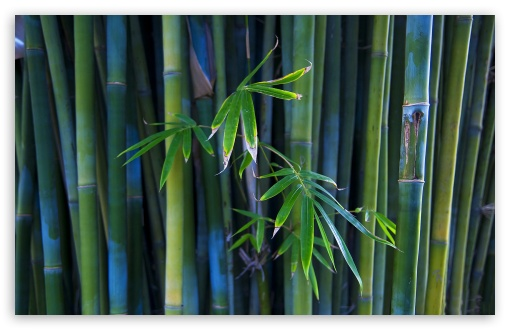 Bamboo ❤ 4K UHD Wallpaper for Wide 16:10 5:3 Widescreen WHXGA WQXGA WUXGA WXGA WGA ; 4K UHD 16:9 Ultra High Definition 2160p 1440p 1080p 900p 720p ; Standard 4:3 5:4 3:2 Fullscreen UXGA XGA SVGA QSXGA SXGA DVGA HVGA HQVGA ( Apple PowerBook G4 iPhone 4 3G 3GS iPod Touch ) ; Tablet 1:1 ; iPad 1/2/Mini ; Mobile 4:3 5:3 3:2 16:9 5:4 - UXGA XGA SVGA WGA DVGA HVGA HQVGA ( Apple PowerBook G4 iPhone 4 3G 3GS iPod Touch ) 2160p 1440p 1080p 900p 720p QSXGA SXGA ;