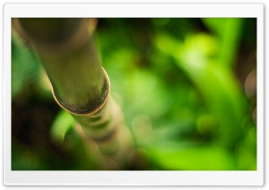 Bamboo For Desktop HD Wide Wallpaper for Widescreen