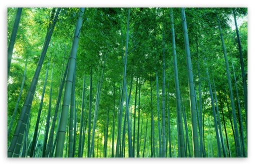 Bamboo Forest HD wallpaper for Wide 16:10 5:3 Widescreen WHXGA WQXGA WUXGA WXGA WGA ; HD 16:9 High Definition WQHD QWXGA 1080p 900p 720p QHD nHD ; Standard 4:3 5:4 3:2 Fullscreen UXGA XGA SVGA QSXGA SXGA DVGA HVGA HQVGA devices ( Apple PowerBook G4 iPhone 4 3G 3GS iPod Touch ) ; iPad 1/2/Mini ; Mobile 4:3 5:3 3:2 16:9 5:4 - UXGA XGA SVGA WGA DVGA HVGA HQVGA devices ( Apple PowerBook G4 iPhone 4 3G 3GS iPod Touch ) WQHD QWXGA 1080p 900p 720p QHD nHD QSXGA SXGA ;
