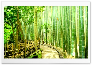Bamboo Forest - Japan Kamakura HD Wide Wallpaper for 4K UHD Widescreen desktop & smartphone