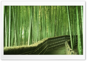 Bamboo Forest Background HD Wide Wallpaper for Widescreen