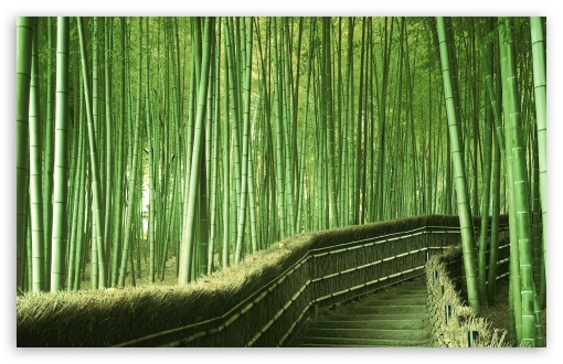 Bamboo Forest Background HD wallpaper for Wide 16:10 5:3 Widescreen WHXGA WQXGA WUXGA WXGA WGA ; HD 16:9 High Definition WQHD QWXGA 1080p 900p 720p QHD nHD ; Standard 4:3 5:4 3:2 Fullscreen UXGA XGA SVGA QSXGA SXGA DVGA HVGA HQVGA devices ( Apple PowerBook G4 iPhone 4 3G 3GS iPod Touch ) ; Tablet 1:1 ; iPad 1/2/Mini ; Mobile 4:3 5:3 3:2 16:9 5:4 - UXGA XGA SVGA WGA DVGA HVGA HQVGA devices ( Apple PowerBook G4 iPhone 4 3G 3GS iPod Touch ) WQHD QWXGA 1080p 900p 720p QHD nHD QSXGA SXGA ;
