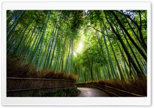 Bamboo Forest, Kyoto, Japan HD Wide Wallpaper for Widescreen