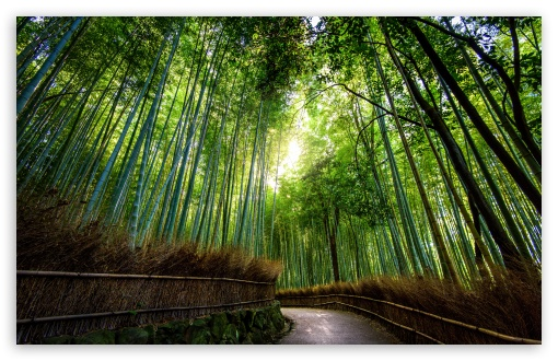 Bamboo Forest, Kyoto, Japan HD wallpaper for Wide 16:10 5:3 Widescreen WHXGA WQXGA WUXGA WXGA WGA ; UltraWide 21:9 24:10 ; HD 16:9 High Definition WQHD QWXGA 1080p 900p 720p QHD nHD ; UHD 16:9 WQHD QWXGA 1080p 900p 720p QHD nHD ; Standard 4:3 5:4 3:2 Fullscreen UXGA XGA SVGA QSXGA SXGA DVGA HVGA HQVGA devices ( Apple PowerBook G4 iPhone 4 3G 3GS iPod Touch ) ; Smartphone 16:9 3:2 5:3 WQHD QWXGA 1080p 900p 720p QHD nHD DVGA HVGA HQVGA devices ( Apple PowerBook G4 iPhone 4 3G 3GS iPod Touch ) WGA ; Tablet 1:1 ; iPad 1/2/Mini ; Mobile 4:3 5:3 3:2 16:9 5:4 - UXGA XGA SVGA WGA DVGA HVGA HQVGA devices ( Apple PowerBook G4 iPhone 4 3G 3GS iPod Touch ) WQHD QWXGA 1080p 900p 720p QHD nHD QSXGA SXGA ;