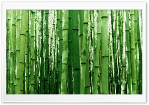 Bamboo Green Light HD Wide Wallpaper for Widescreen