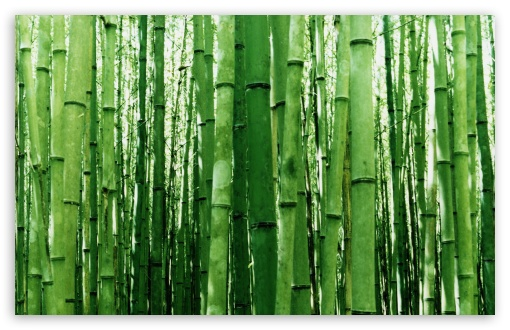 Bamboo Green Light ❤ 4K UHD Wallpaper for Wide 16:10 5:3 Widescreen WHXGA WQXGA WUXGA WXGA WGA ; 4K UHD 16:9 Ultra High Definition 2160p 1440p 1080p 900p 720p ; Standard 4:3 5:4 3:2 Fullscreen UXGA XGA SVGA QSXGA SXGA DVGA HVGA HQVGA ( Apple PowerBook G4 iPhone 4 3G 3GS iPod Touch ) ; Tablet 1:1 ; iPad 1/2/Mini ; Mobile 4:3 5:3 3:2 16:9 5:4 - UXGA XGA SVGA WGA DVGA HVGA HQVGA ( Apple PowerBook G4 iPhone 4 3G 3GS iPod Touch ) 2160p 1440p 1080p 900p 720p QSXGA SXGA ;