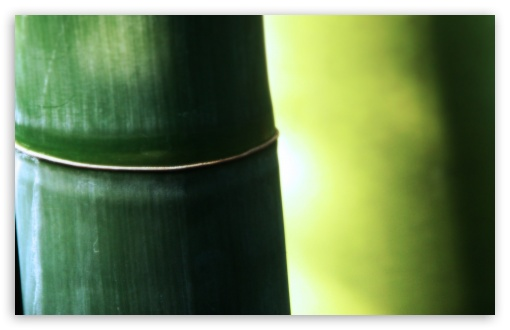 Bamboo Macro HD wallpaper for Wide 16:10 5:3 Widescreen WHXGA WQXGA WUXGA WXGA WGA ; HD 16:9 High Definition WQHD QWXGA 1080p 900p 720p QHD nHD ; Standard 4:3 5:4 3:2 Fullscreen UXGA XGA SVGA QSXGA SXGA DVGA HVGA HQVGA devices ( Apple PowerBook G4 iPhone 4 3G 3GS iPod Touch ) ; Tablet 1:1 ; iPad 1/2/Mini ; Mobile 4:3 5:3 3:2 16:9 5:4 - UXGA XGA SVGA WGA DVGA HVGA HQVGA devices ( Apple PowerBook G4 iPhone 4 3G 3GS iPod Touch ) WQHD QWXGA 1080p 900p 720p QHD nHD QSXGA SXGA ;