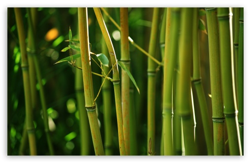 Bamboo Stems HD wallpaper for Wide 16:10 5:3 Widescreen WHXGA WQXGA WUXGA WXGA WGA ; HD 16:9 High Definition WQHD QWXGA 1080p 900p 720p QHD nHD ; UHD 16:9 WQHD QWXGA 1080p 900p 720p QHD nHD ; Standard 4:3 5:4 3:2 Fullscreen UXGA XGA SVGA QSXGA SXGA DVGA HVGA HQVGA devices ( Apple PowerBook G4 iPhone 4 3G 3GS iPod Touch ) ; Tablet 1:1 ; iPad 1/2/Mini ; Mobile 4:3 5:3 3:2 16:9 5:4 - UXGA XGA SVGA WGA DVGA HVGA HQVGA devices ( Apple PowerBook G4 iPhone 4 3G 3GS iPod Touch ) WQHD QWXGA 1080p 900p 720p QHD nHD QSXGA SXGA ;