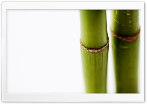Bamboo Stems On White Background HD Wide Wallpaper for Widescreen