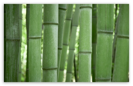 Bamboo Trees ❤ 4K UHD Wallpaper for Wide 16:10 5:3 Widescreen WHXGA WQXGA WUXGA WXGA WGA ; 4K UHD 16:9 Ultra High Definition 2160p 1440p 1080p 900p 720p ; Standard 4:3 5:4 3:2 Fullscreen UXGA XGA SVGA QSXGA SXGA DVGA HVGA HQVGA ( Apple PowerBook G4 iPhone 4 3G 3GS iPod Touch ) ; Tablet 1:1 ; iPad 1/2/Mini ; Mobile 4:3 5:3 3:2 16:9 5:4 - UXGA XGA SVGA WGA DVGA HVGA HQVGA ( Apple PowerBook G4 iPhone 4 3G 3GS iPod Touch ) 2160p 1440p 1080p 900p 720p QSXGA SXGA ;