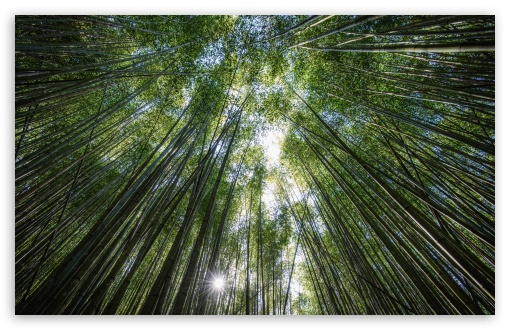 Bamboos, the Fastest growing Plants in the World ❤ 4K UHD Wallpaper for Wide 16:10 5:3 Widescreen WHXGA WQXGA WUXGA WXGA WGA ; UltraWide 21:9 24:10 ; 4K UHD 16:9 Ultra High Definition 2160p 1440p 1080p 900p 720p ; UHD 16:9 2160p 1440p 1080p 900p 720p ; Standard 4:3 5:4 3:2 Fullscreen UXGA XGA SVGA QSXGA SXGA DVGA HVGA HQVGA ( Apple PowerBook G4 iPhone 4 3G 3GS iPod Touch ) ; Smartphone 16:9 3:2 5:3 2160p 1440p 1080p 900p 720p DVGA HVGA HQVGA ( Apple PowerBook G4 iPhone 4 3G 3GS iPod Touch ) WGA ; Tablet 1:1 ; iPad 1/2/Mini ; Mobile 4:3 5:3 3:2 16:9 5:4 - UXGA XGA SVGA WGA DVGA HVGA HQVGA ( Apple PowerBook G4 iPhone 4 3G 3GS iPod Touch ) 2160p 1440p 1080p 900p 720p QSXGA SXGA ; Dual 16:10 5:3 16:9 4:3 5:4 3:2 WHXGA WQXGA WUXGA WXGA WGA 2160p 1440p 1080p 900p 720p UXGA XGA SVGA QSXGA SXGA DVGA HVGA HQVGA ( Apple PowerBook G4 iPhone 4 3G 3GS iPod Touch ) ; Triple 16:10 5:3 16:9 4:3 5:4 3:2 WHXGA WQXGA WUXGA WXGA WGA 2160p 1440p 1080p 900p 720p UXGA XGA SVGA QSXGA SXGA DVGA HVGA HQVGA ( Apple PowerBook G4 iPhone 4 3G 3GS iPod Touch ) ;