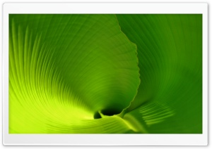 Banana Leaf Close Up HD Wide Wallpaper for Widescreen