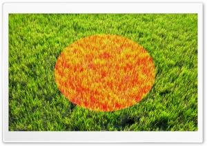 Bangladesh Ultra HD Wallpaper for 4K UHD Widescreen desktop, tablet & smartphone