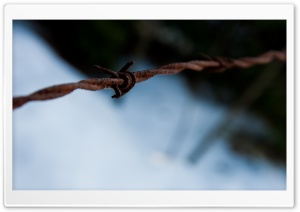 Barb Wire Macro HD Wide Wallpaper for Widescreen