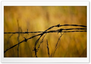 Barbed Wire HD Wide Wallpaper for Widescreen