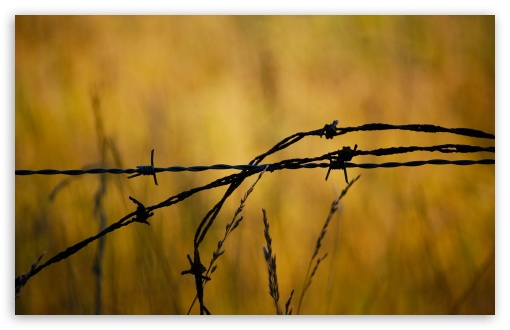 Barbed Wire HD wallpaper for Wide 16:10 5:3 Widescreen WHXGA WQXGA WUXGA WXGA WGA ; HD 16:9 High Definition WQHD QWXGA 1080p 900p 720p QHD nHD ; Standard 4:3 5:4 3:2 Fullscreen UXGA XGA SVGA QSXGA SXGA DVGA HVGA HQVGA devices ( Apple PowerBook G4 iPhone 4 3G 3GS iPod Touch ) ; Tablet 1:1 ; iPad 1/2/Mini ; Mobile 4:3 5:3 3:2 16:9 5:4 - UXGA XGA SVGA WGA DVGA HVGA HQVGA devices ( Apple PowerBook G4 iPhone 4 3G 3GS iPod Touch ) WQHD QWXGA 1080p 900p 720p QHD nHD QSXGA SXGA ;
