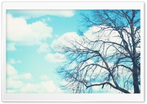 Bare Tree & Blue Sky HD Wide Wallpaper for Widescreen