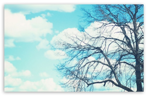 Bare Tree & Blue Sky ❤ 4K UHD Wallpaper for Wide 16:10 5:3 Widescreen WHXGA WQXGA WUXGA WXGA WGA ; 4K UHD 16:9 Ultra High Definition 2160p 1440p 1080p 900p 720p ; Standard 4:3 5:4 3:2 Fullscreen UXGA XGA SVGA QSXGA SXGA DVGA HVGA HQVGA ( Apple PowerBook G4 iPhone 4 3G 3GS iPod Touch ) ; Tablet 1:1 ; iPad 1/2/Mini ; Mobile 4:3 5:3 3:2 16:9 5:4 - UXGA XGA SVGA WGA DVGA HVGA HQVGA ( Apple PowerBook G4 iPhone 4 3G 3GS iPod Touch ) 2160p 1440p 1080p 900p 720p QSXGA SXGA ;