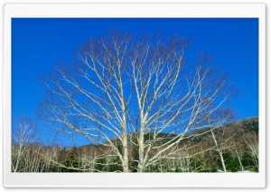 Bare Tree Against Blue Sky HD Wide Wallpaper for 4K UHD Widescreen desktop & smartphone