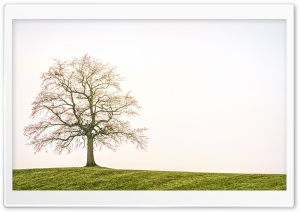 Bare Tree, Field Ultra HD Wallpaper for 4K UHD Widescreen desktop, tablet & smartphone