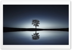 Bare Tree, Winter Night HD Wide Wallpaper for 4K UHD Widescreen desktop & smartphone