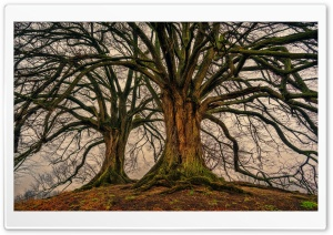 Bare Trees HD Wide Wallpaper for Widescreen