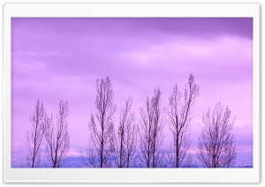 Bare Trees In Winter HD Wide Wallpaper for Widescreen