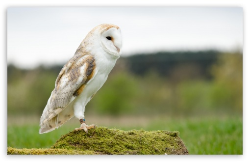 Barn Owl ❤ 4K UHD Wallpaper for Wide 16:10 5:3 Widescreen WHXGA WQXGA WUXGA WXGA WGA ; 4K UHD 16:9 Ultra High Definition 2160p 1440p 1080p 900p 720p ; UHD 16:9 2160p 1440p 1080p 900p 720p ; Standard 4:3 5:4 3:2 Fullscreen UXGA XGA SVGA QSXGA SXGA DVGA HVGA HQVGA ( Apple PowerBook G4 iPhone 4 3G 3GS iPod Touch ) ; Smartphone 5:3 WGA ; Tablet 1:1 ; iPad 1/2/Mini ; Mobile 4:3 5:3 3:2 16:9 5:4 - UXGA XGA SVGA WGA DVGA HVGA HQVGA ( Apple PowerBook G4 iPhone 4 3G 3GS iPod Touch ) 2160p 1440p 1080p 900p 720p QSXGA SXGA ;