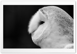 Barn Owl Black And White HD Wide Wallpaper for Widescreen