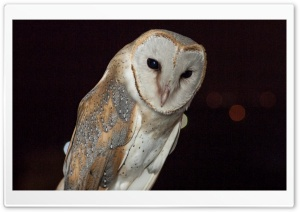 Barn Owl Night Time HD Wide Wallpaper for Widescreen
