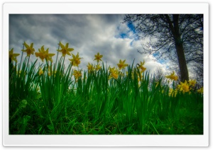Basingstoke Spring Ultra HD Wallpaper for 4K UHD Widescreen desktop, tablet & smartphone
